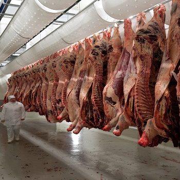 Maloobchodní i velkoobchodní prodej vepřového masa