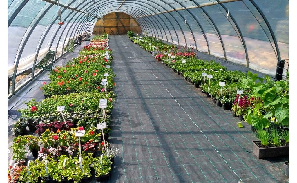 Pěstitelské substráty, jarní cibuloviny, zeleninové přísady, ovocné stromky, osiva, semínka na prodej v zahradnictví
