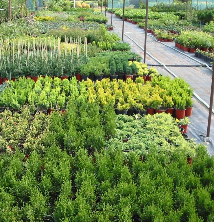 Prodej trav v zahradnictví