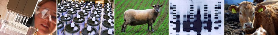 Veterinární ústav,nemoc a úhyn zvířat,veterinární vyšetření Jihlava