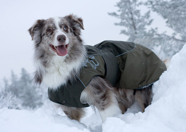 Zimní funkční oblečky pro psy finská psí móda bundy vesty HURTTA