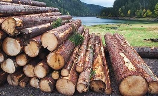 Těžba a přibližování dřeva technologií UKT a LKT Klatovy, ruční a strojová těžba dřeva po celé ČR