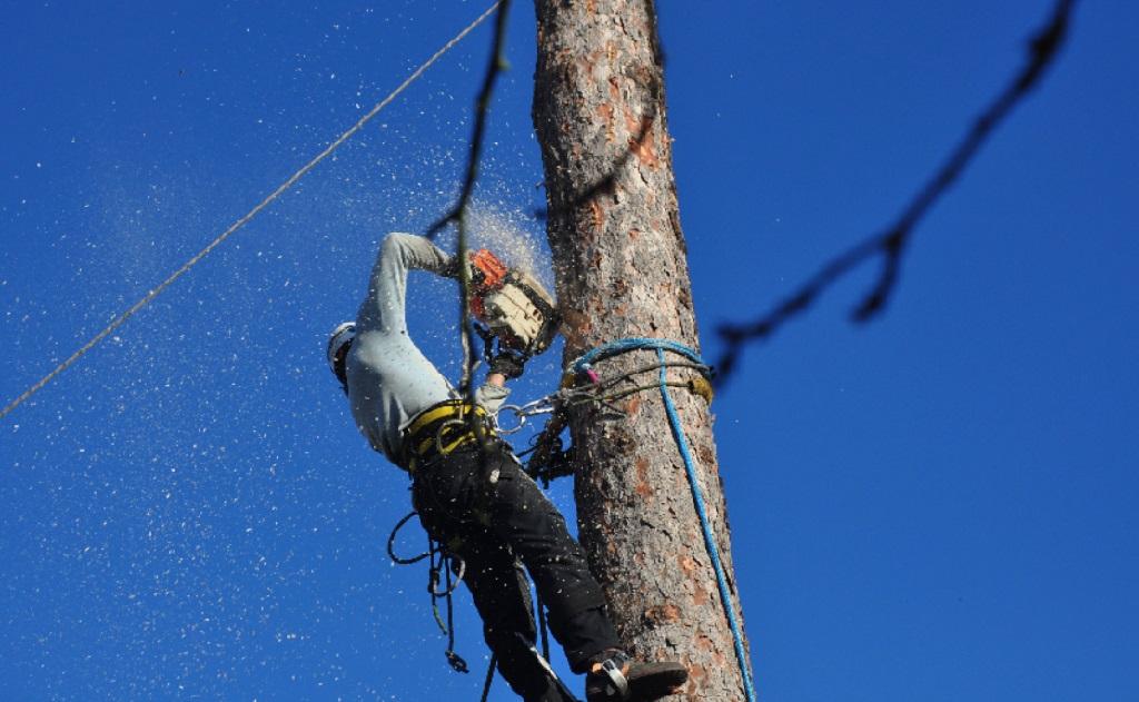 Rizikové kácení stromů - ořez a pokácení nestabilního, nebezpečného stromu