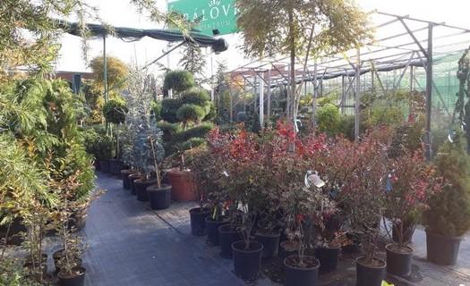 Zahradnictví, velkoobchod, maloobchod Brno