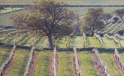 Teambuilding a firemní akce přímo ve vinici s ubytováním v penzionu ve vinařství