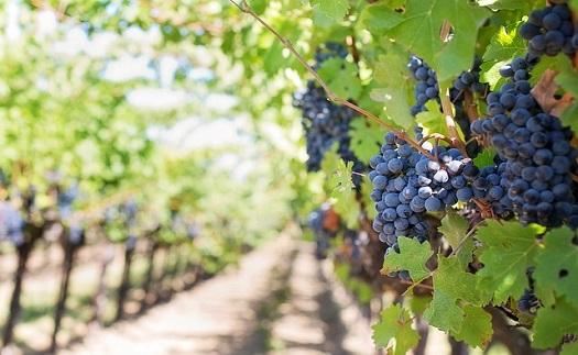 Vinařská turistika se soukromým ubytováním v komfortním penzionu poblíž vinařské stezky