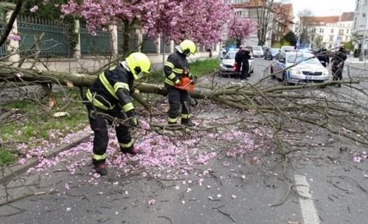 Odstranění stromu ze silnice