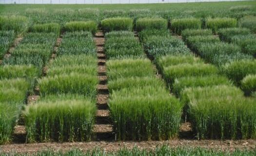 Ochrana plodin a rostlin, Výzkumný ústav rostlinné výroby Praha