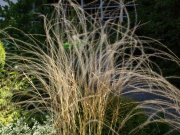 Prodej a pěstování okrasných trav - Lenka Nyklová