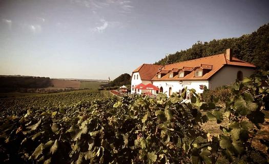 Rodinné vinařství jižní Morava