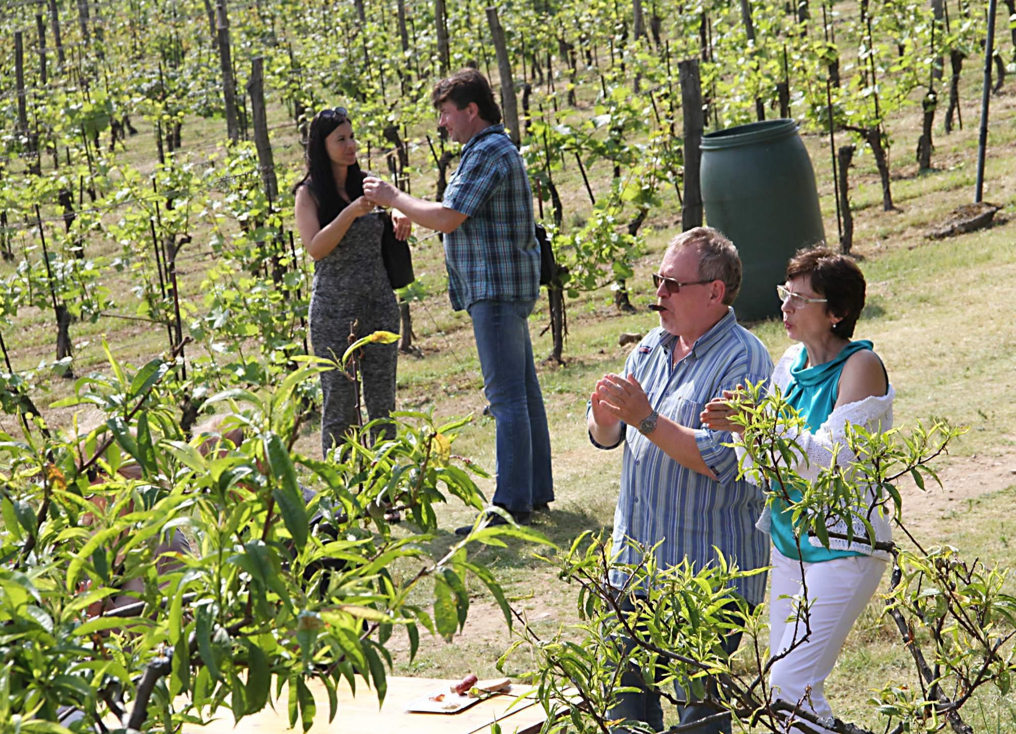 Ochutnávka vín uprostřed vinic, možnost ubytování
