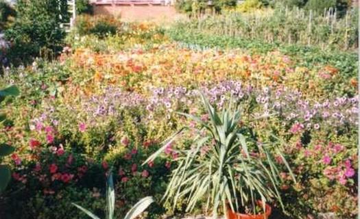Střední zemědělská škola, Písek, školní zahrada