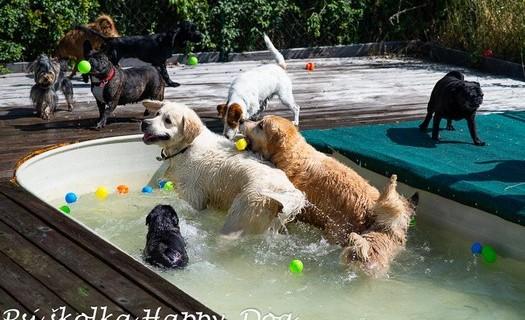 Psí školka Happy Dog Praha, kamarádi a bazén