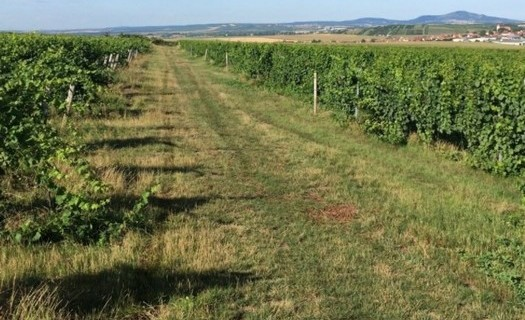 Rodinné vinařství Bukovský Břeclav, výroba vína s minimem chemie
