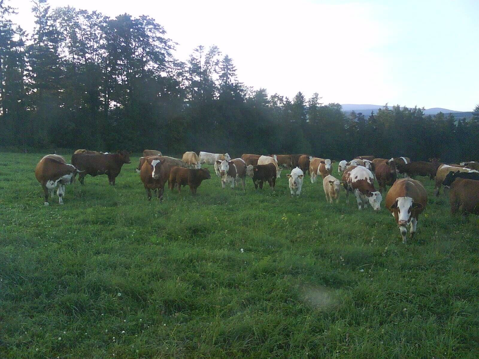Rize česká ekologická zemědělská farma