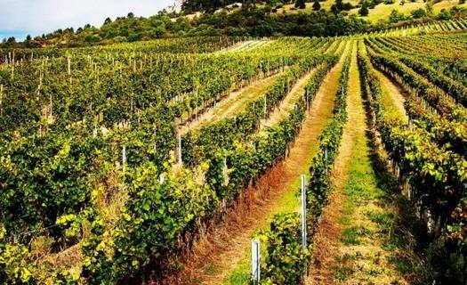 Vinařství Popela Perná, skvělé víno z vlastní vinice, výroba vína dle rodinné tradice, Vinařský dům