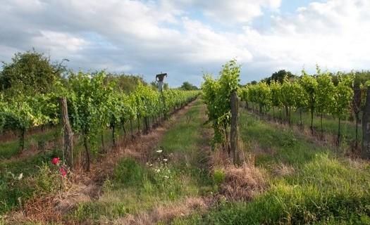 Vinařství Antonína Koníčka Znojmo, pořádáme ochutnávky vín s posezením, degustace vín