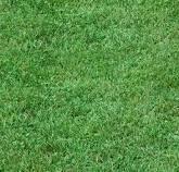 Realizace jezírka, návrhy zahrady, koupací biotopy Litovel