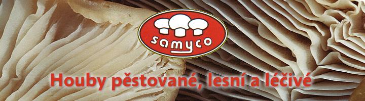Prodej medvědího česneku Praha