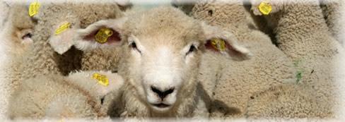 Veterina, chov ovcí, očkování zvířat, prodej krmiv Zlín