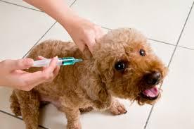 Povinné očkování psů proti vzteklině Jablonec Liberec vakcinace.