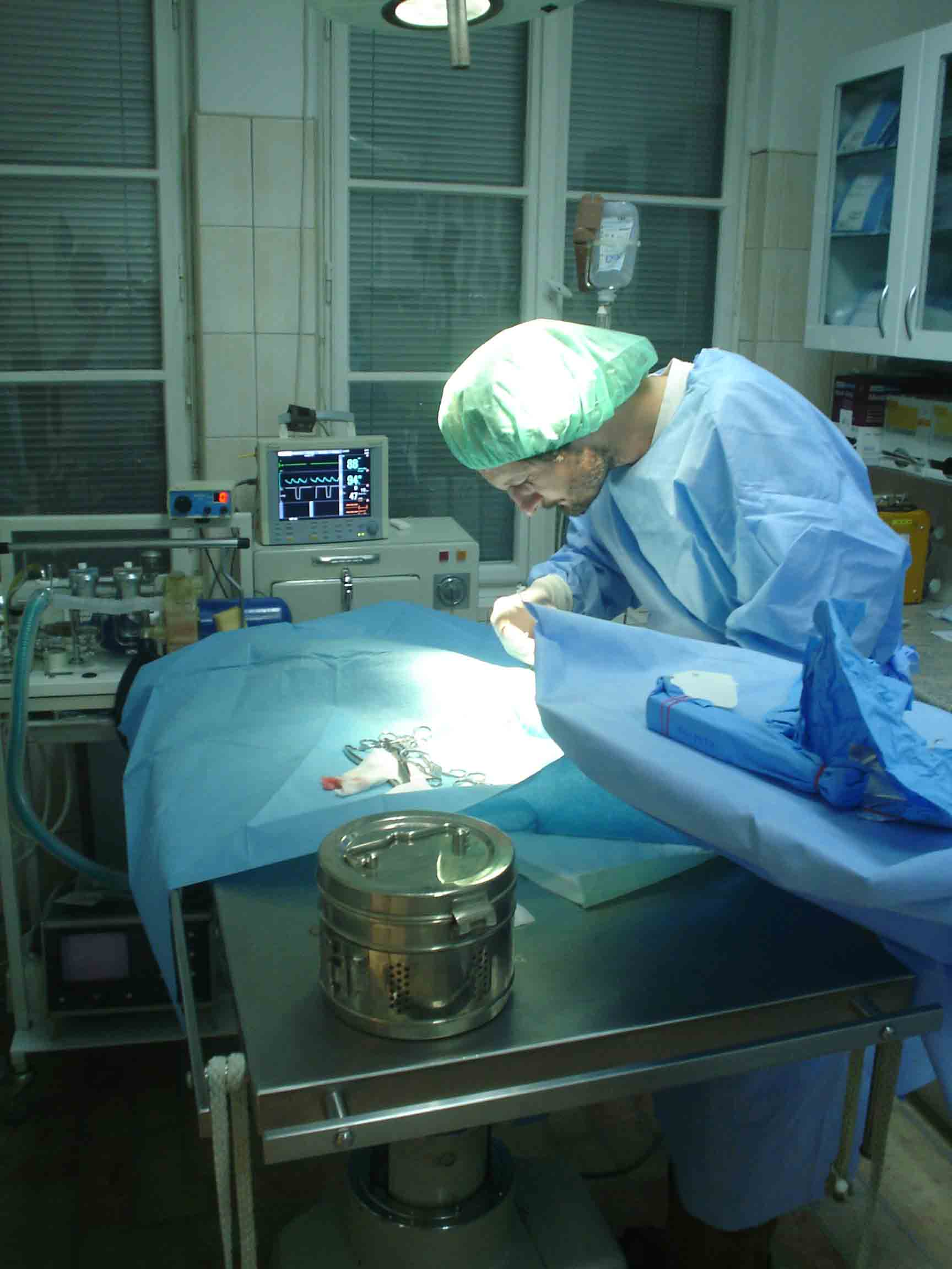 Sterilizace koček