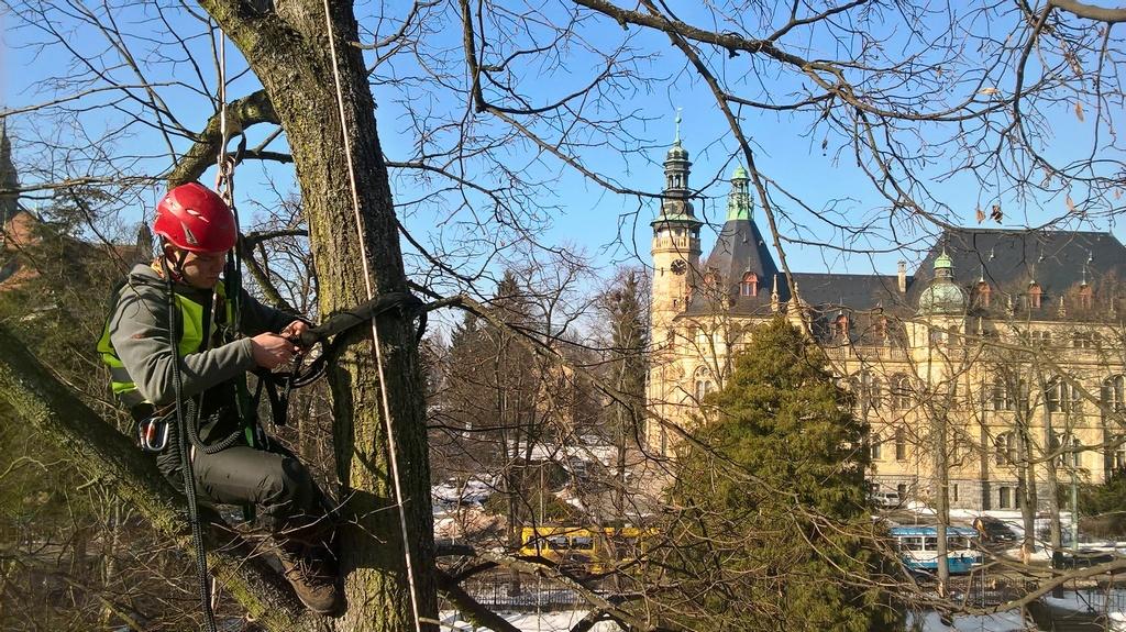 Sekání trávy údržba zeleně rizikové kácení stromů Liberec