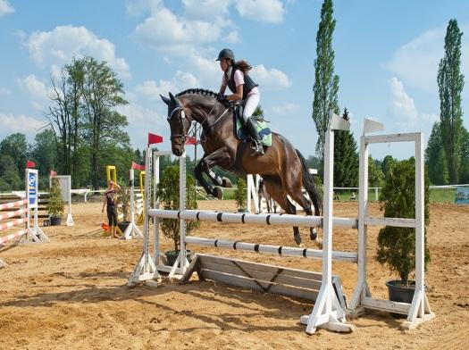 Chov kladrubských koní