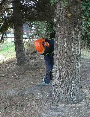Kácení stromů odstraňování pařezů Úvaly
