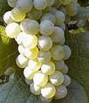 Vinařství Mutěnice, Jihomoravský kraj