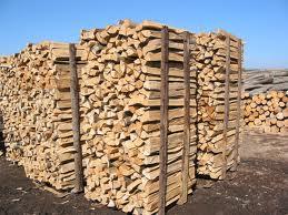 Palivové dřevo javor