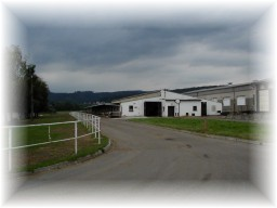 Živočišná výroba, prodej živých a jatečních prasat v ZDV Fryšták
