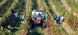 Výroba a prodej vín Čejč