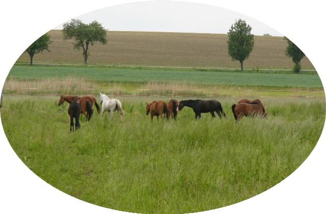 Jízda na koni a ustájení