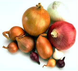 Velkoobchod s cibulí, rostlinná výroba, prodej, pěstování, česká cibule