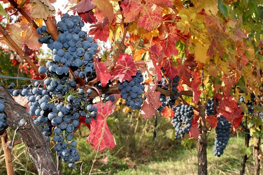 Firemní víno, firemní etikety na víno, BMVinařství s.r.o. Vinařství Tvrdonice
