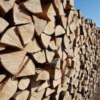 velkoobchod dřeva, dub, akát, buk, habr Znojmo