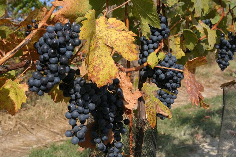 Eshop, prodej vína online, bílé víno, červené víno z oblasti Velké Pavlovice