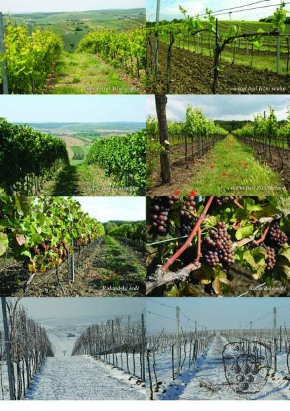 vinárna valtické podzemí