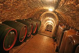 Destace vín ve vinném sklepě Jižní morava