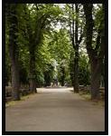 Sjednání pohřbu Praha