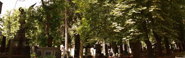 Sjednání pohřbu z domova