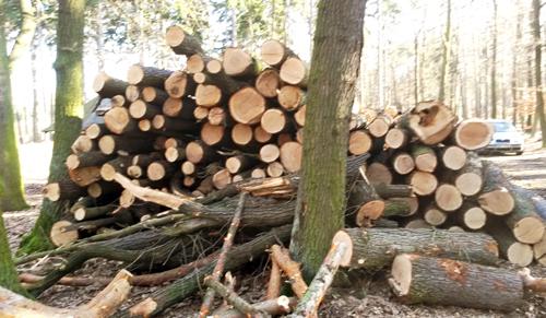 Kvalitní dubové palivové dříví prodej Praha