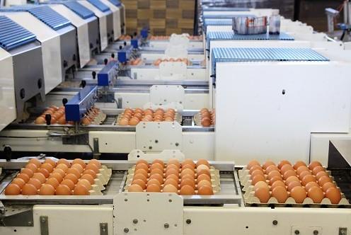 Velikonoční vejce - distribuce přímo od Podniku na výrobu vajec v Kosičkách