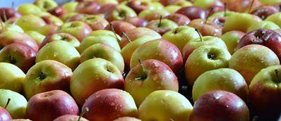 Ovoce Znojmo, prodej ovoce, jablka Moravský Krumlov