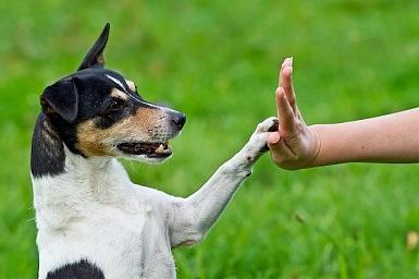 Veterinární klinika, ordinace - očkování zvířat profesionální veterinářem