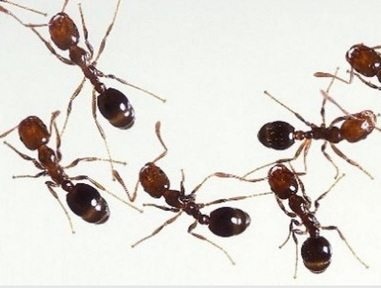 Deratizace, hubení hmyzu, dezinfekce, Chomutov