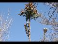 Výškové práce, rizikové kácení a prořezy stromů Brno