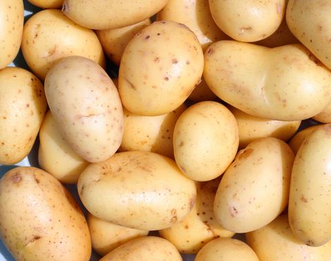 Pěstování a prodej raných brambor a brambor na uskladnění Jihomoravský kraj, Brno, Znojmo