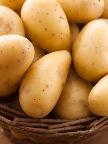 Pěstování brambor a okurek nakladaček Znojemsko